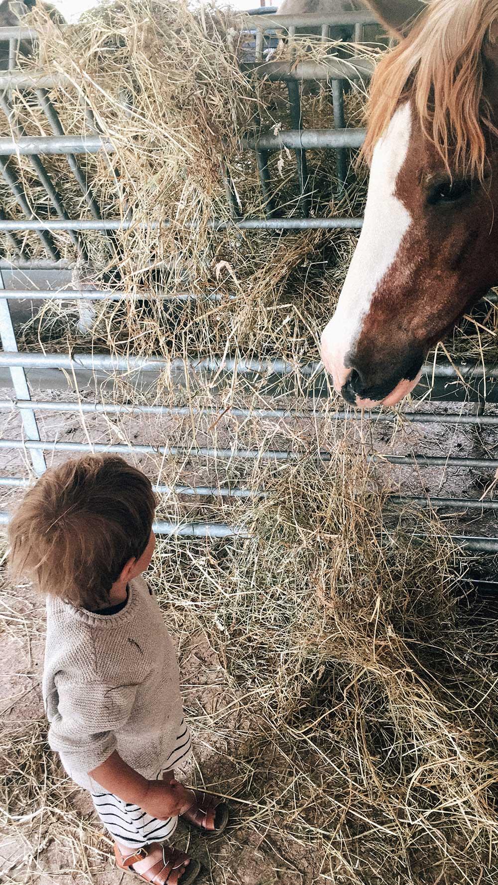 Entspannter Familienurlaub: Country Kids in Frankreich