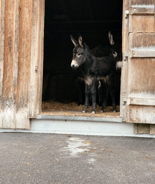 Doppelmayr Zoo in Wolfurt